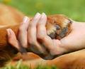 curare gli animali naturalmente