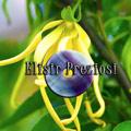 elisir_preziosi_cristalli_e_oli_essenziali