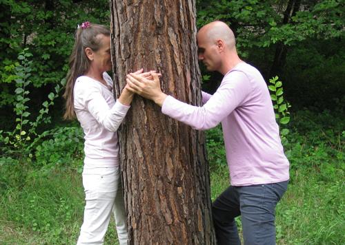 dendroterapia gli alberi sono luce