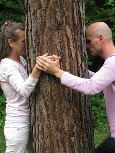 alberi e luce il soffio vitale