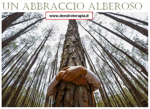 dendroterapia_abbraccio