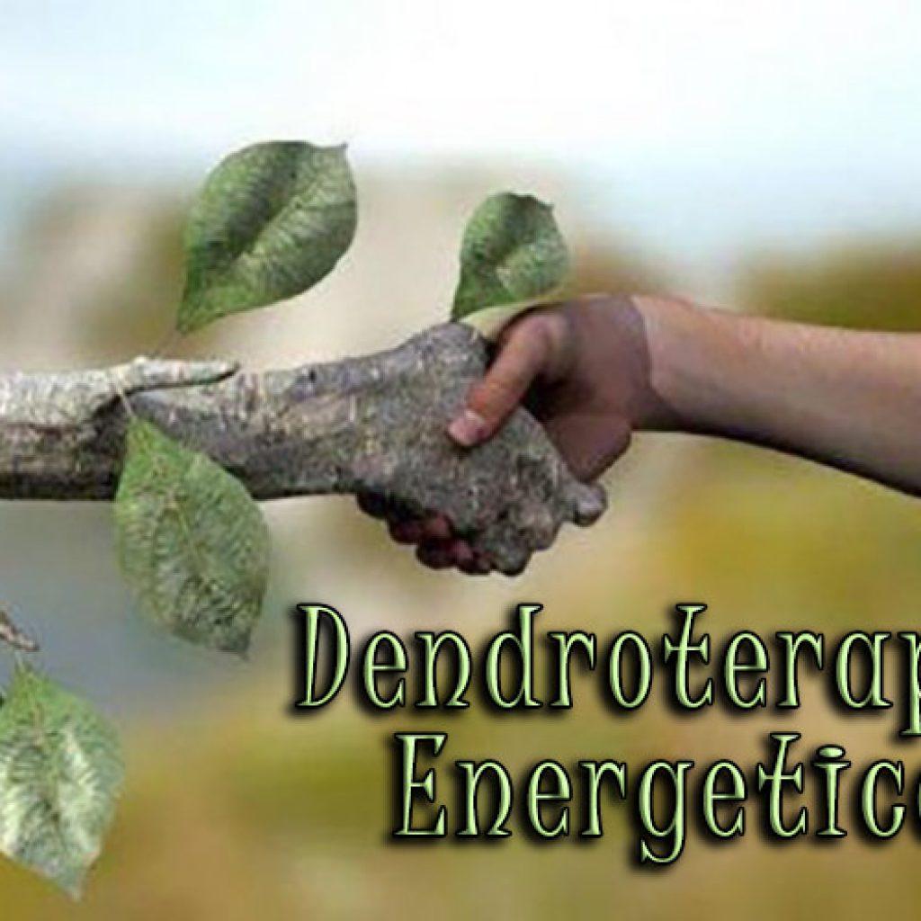 dendroterapia_energetica_amare_gli_alberi