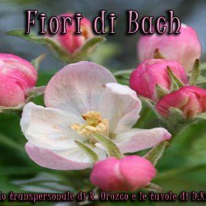fiori_di_bach_bologna