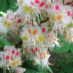 fioriamo_fiore