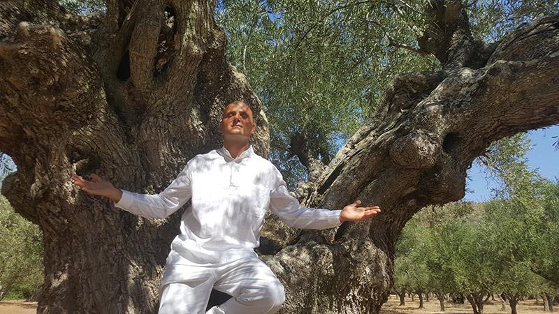 dendroterapia_energetica_alberi