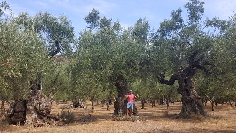 dendroterapia_energetica_alberi_ema