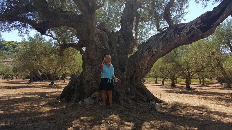 dendroterapia_energetica_alberi_ign