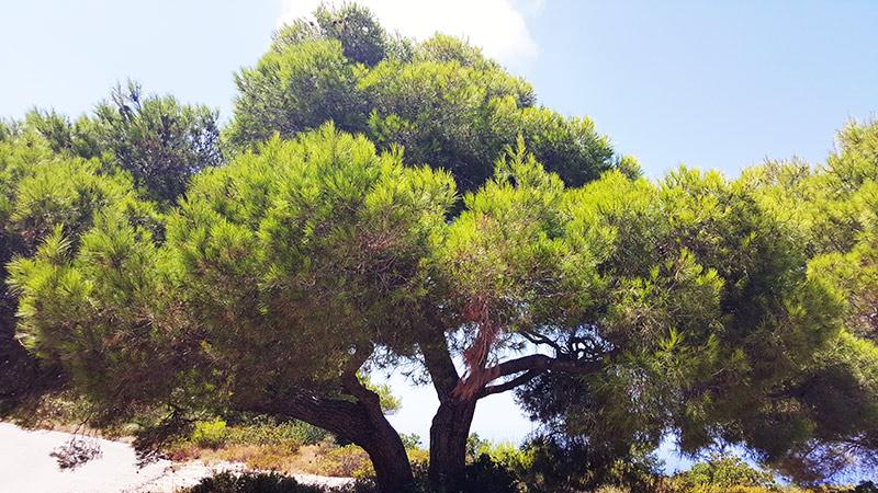 dendroterapia_energetica_alberi_ver