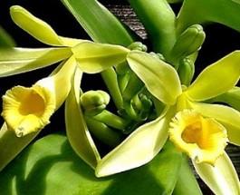 Aromaterapia: la cura con gli oli essenziali