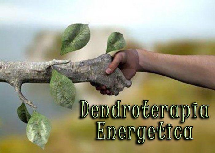 Dendroterapia Energetica: Armonizzazione e Cura tra Alberi e Umani