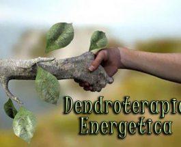 Dendroterapia Energetica – Armonizzazione e Cura tra Alberi e Uomini