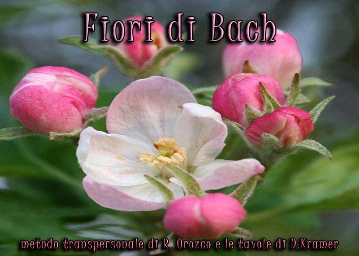 Fiori di Bach e Massaggio Floreale secondo il metodo transpersonale di Bach, Orozco e le tavole di Kramer